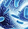 lactobacillus.png